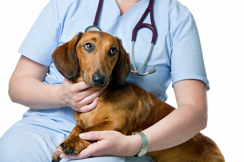 Ricetta elettronica veterinaria, i numeri del primo mese